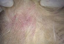 la dermatitis en perros
