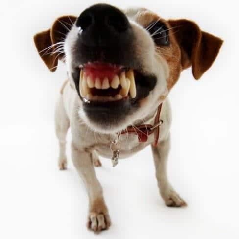 Resultado de imagen para mordedura de perro