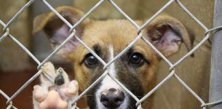 Adopcion de perros en bogota