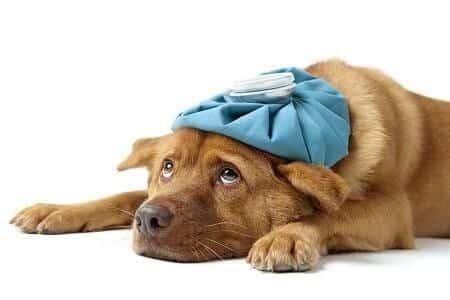 Enfermedades en los perros