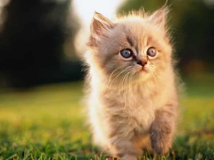 Conoce la ternura de un gatito