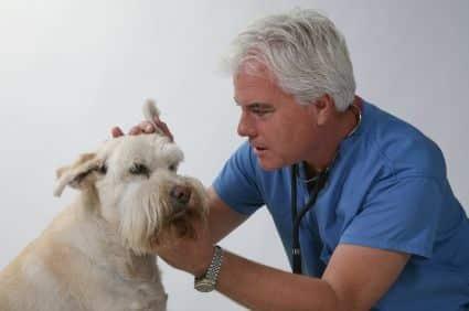 enfermedades mas comunes en perros