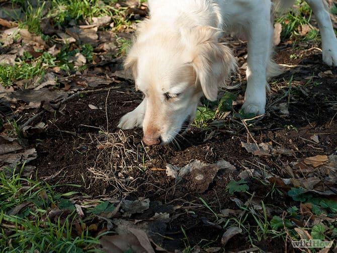 porque los perros comen tierra