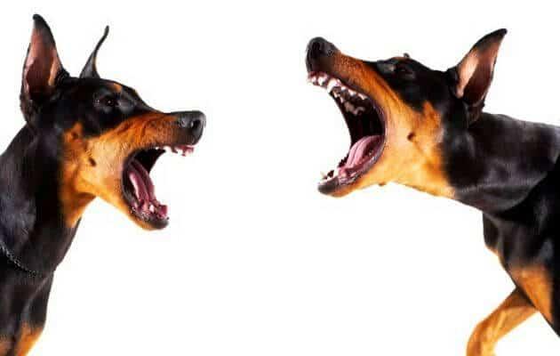 por que los perros ladran
