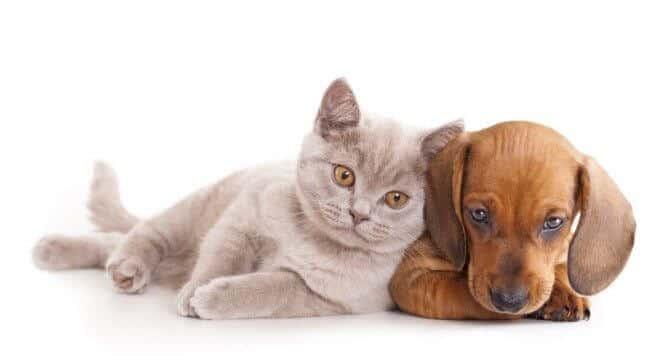 por que los perros odian a los gatos