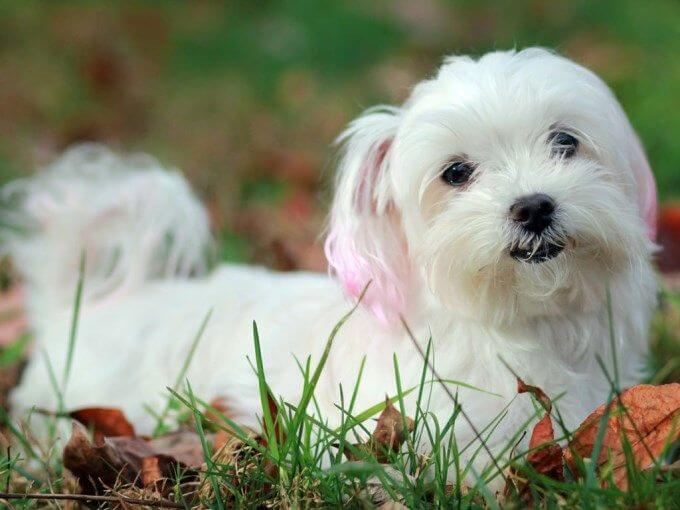 Por que los perros tiemblan
