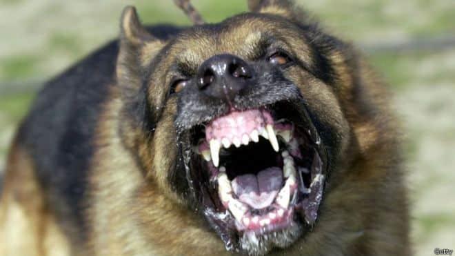 rabia furiosa en perros