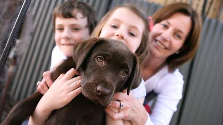 Prepara tu hogar para llegada de una nueva mascota