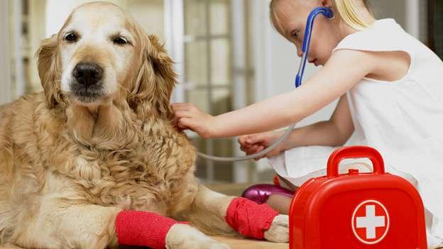 mantenimiento de la piel en perros