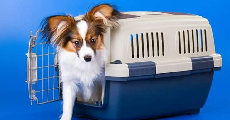 Asegúrate de que tu mascota esté cómoda en su kennel a la hora de viajar