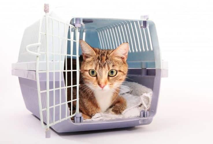 Los gatos también tienen requerimientos especiales de transporte