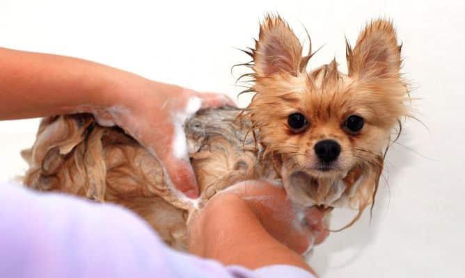 prevencion acaros en perros