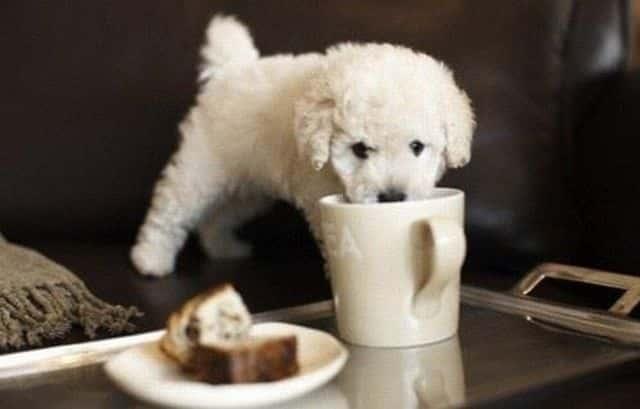 prevencion de diarrea en perros