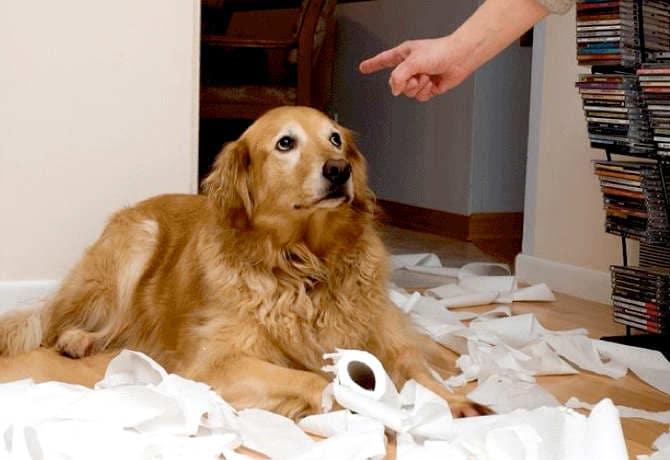 perro distraido