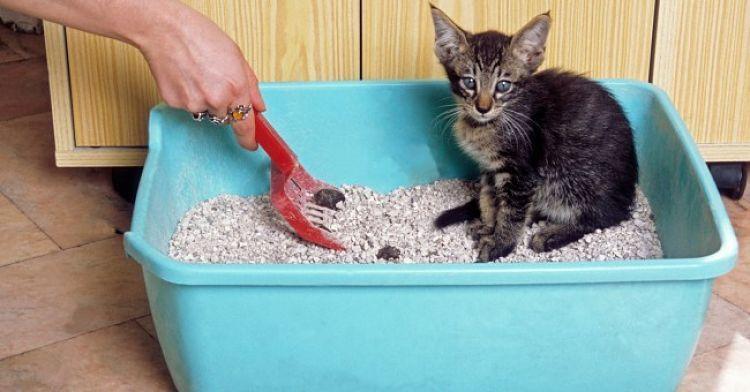 Mantén limpia la caja de arena del gato para evitar la incubación del parásito