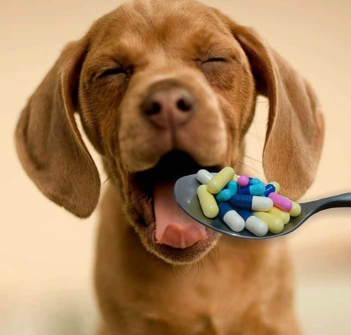 Siempre consulta con el Veterinario antes de medicar a tu mascota