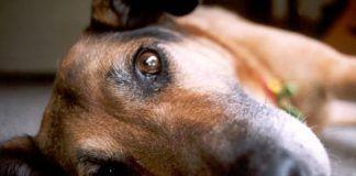 como tratar el vomito en perros