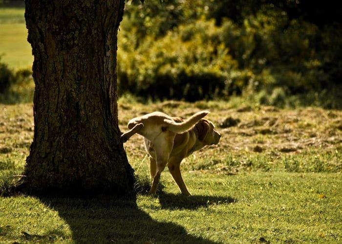 perro marcando
