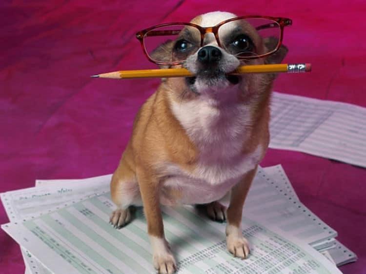 El estudio sobre Inteligencia Canina de Stanley Coren revela las razas más inteligentes