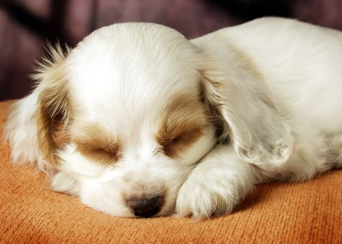 por que los perros duermen tanto