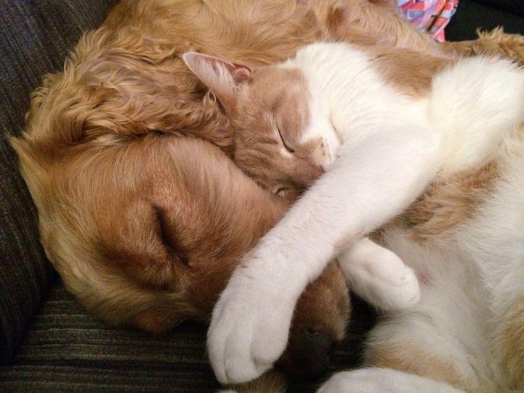 Sigue estos simples pasos para asegurarte de que tu gato y perro sean mejores amigos