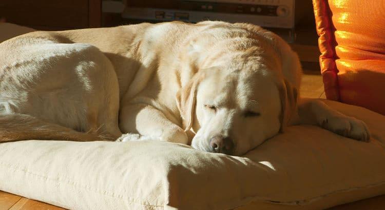 Mantener a nuestra mascota cómoda es muy importante