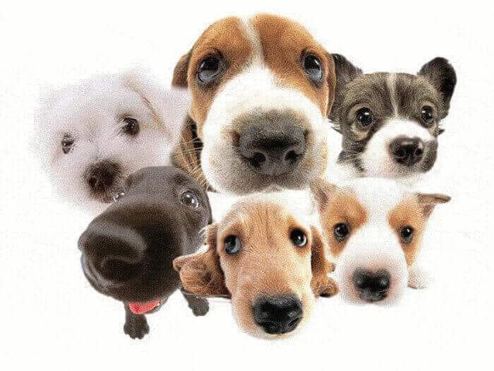 características de los perros