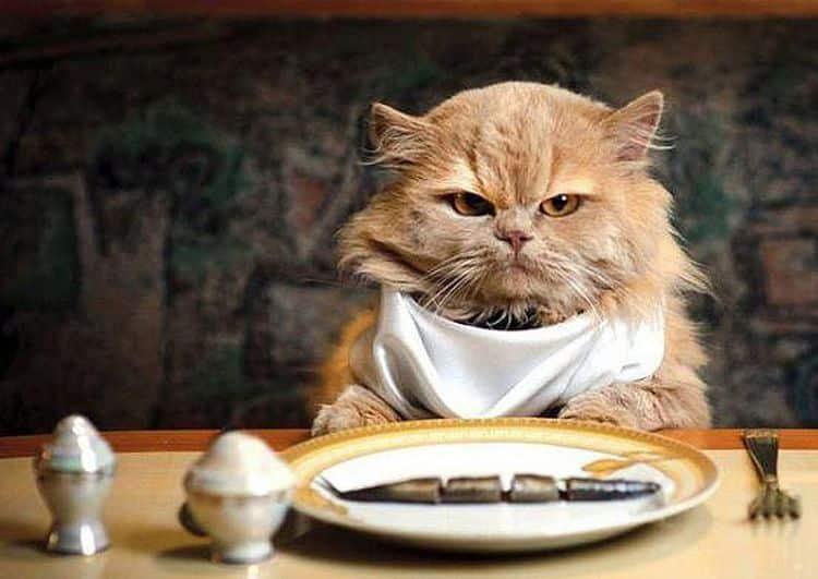 La alimentación alternativa para gatos se ha convertido en una buena opción para los dueños de mascotas