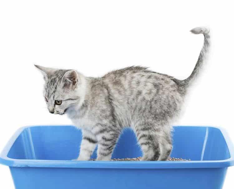 Escoger una caja y arena adecuada es un paso importante para todo dueño de gatos