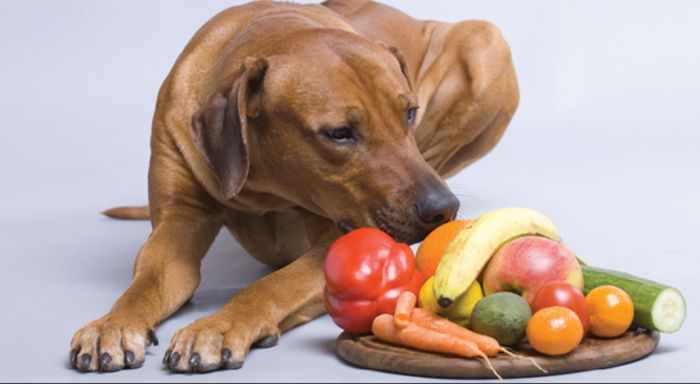 alimentacion para perros hepaticos