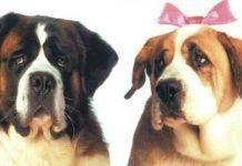 los nombres de perros famosos