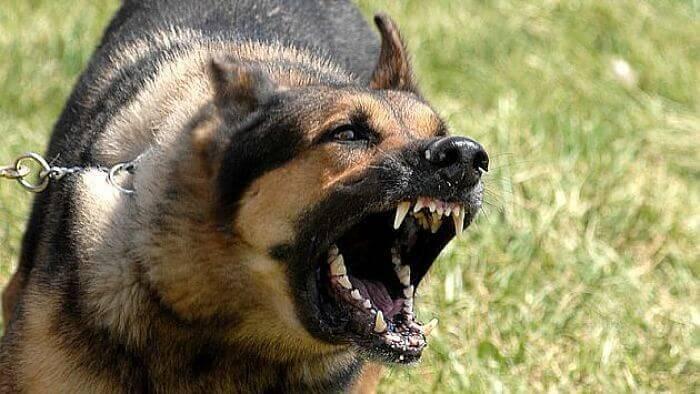 mordeduras causada por perros