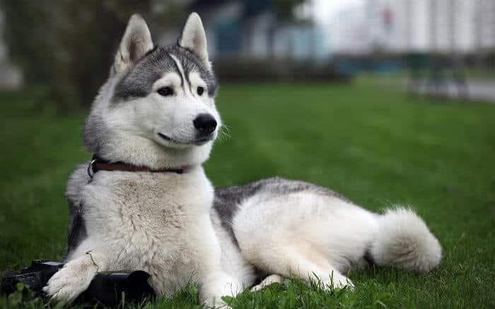 Te gustan los perros? las 10 razas mas inteligentes
