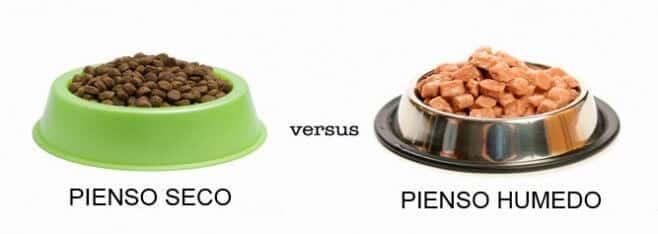 pienso para perros vs comida humeda