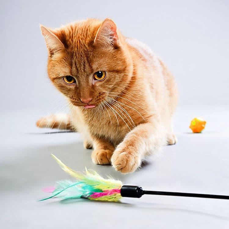 Los gatos pueden liberar su instinto cazador durante el juego