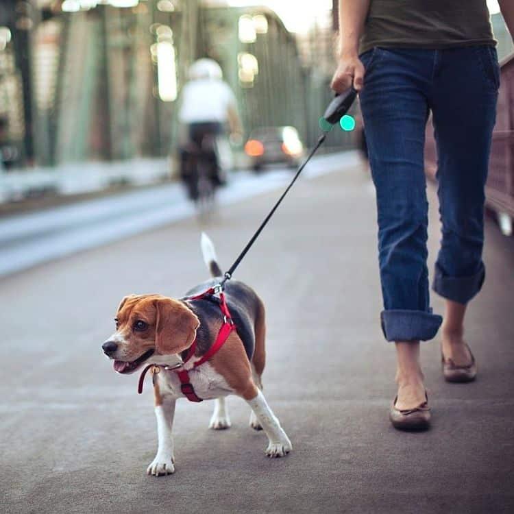 Da un paseo con tu perro entes de salir para que libere ansiedad y energía acumulada