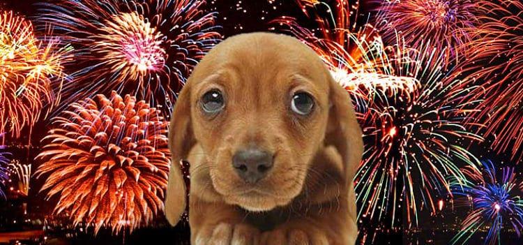 Los perros por tener sentidos más sensibles sienten de manera distinta los fuegos artificiales
