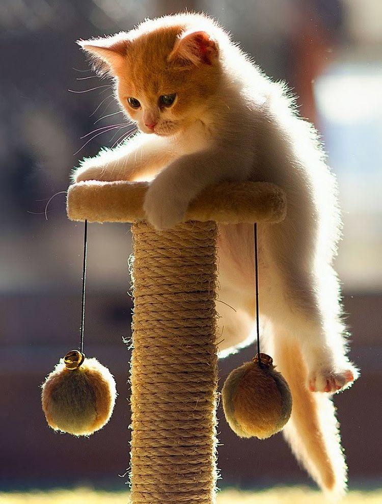 Recuerda que jugar es una parte importante de la vida del gato