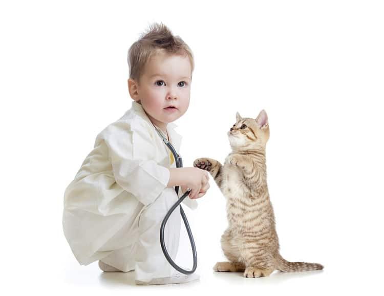 Recuerda que la salud de tu gato es ahora más importante que nunca con la presencia de un niño en casa