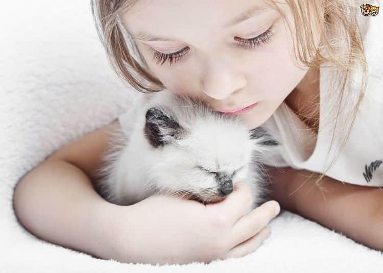 Enséñale a tu niño que los gatos son seres vivos que sienten tal como ellos