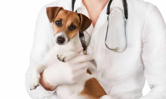 diagnostico de insuficiencia renal en perros