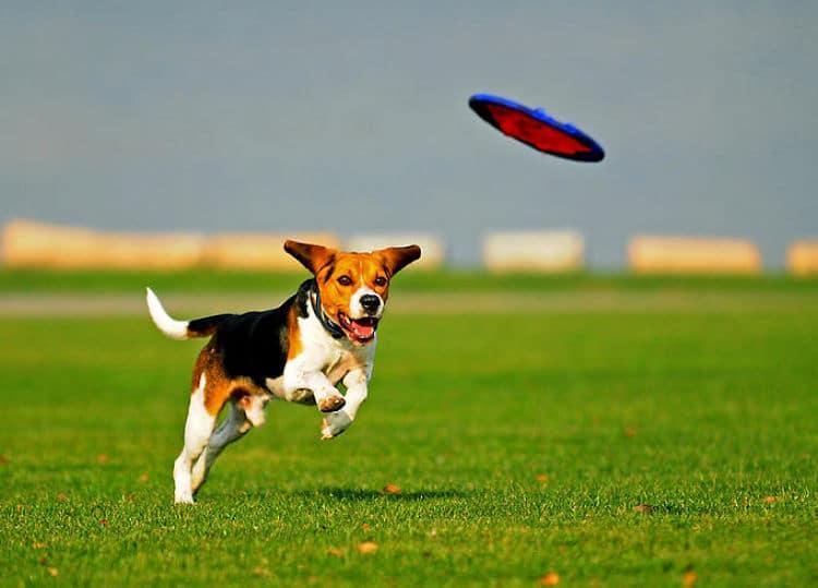Jugar hasta agotar a nuestra mascota puede ayudar a disminuir la hiperactividad