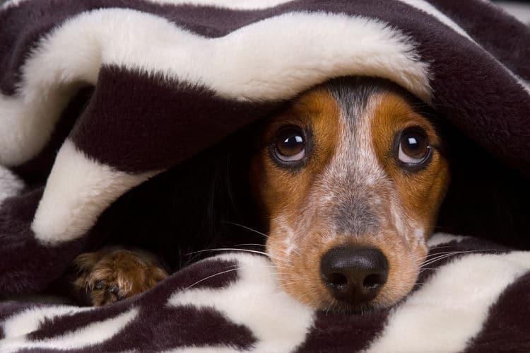 Muchos perros buscarán esconderse. Crea para ellos un lugar seguro