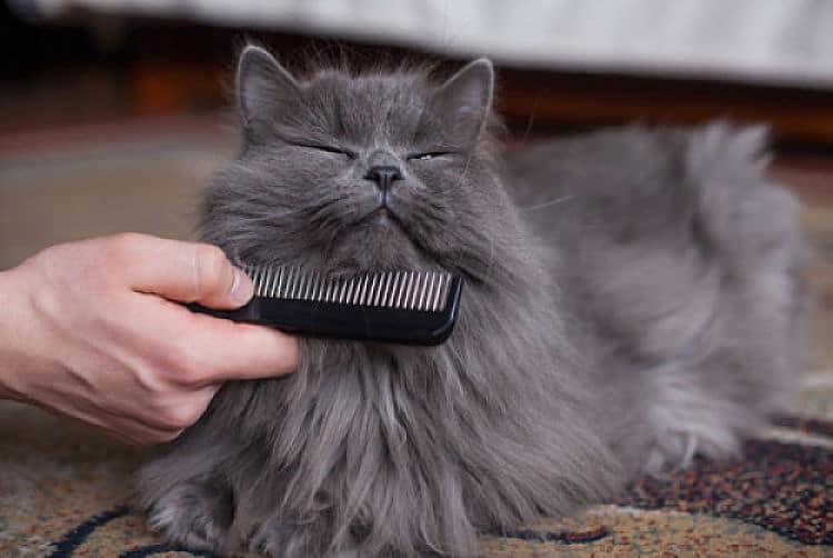 Cepillar y peinar a nuestro gato ayuda a eliminar el pelo muerto y a mantener su pelaje y piel sanos