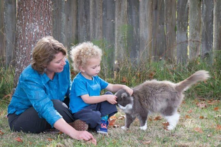 Supervisa los encuentros entre tu gato y tu bebé