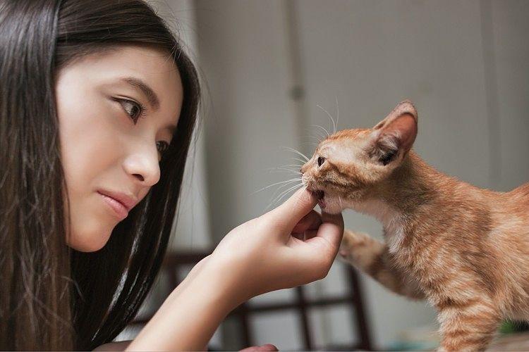 Asegúrate de seguir estos consejos antes de llevar un nuevo a gato a casa
