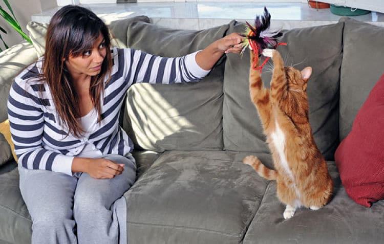 Jugar con tu gato fortalece tu relación con él