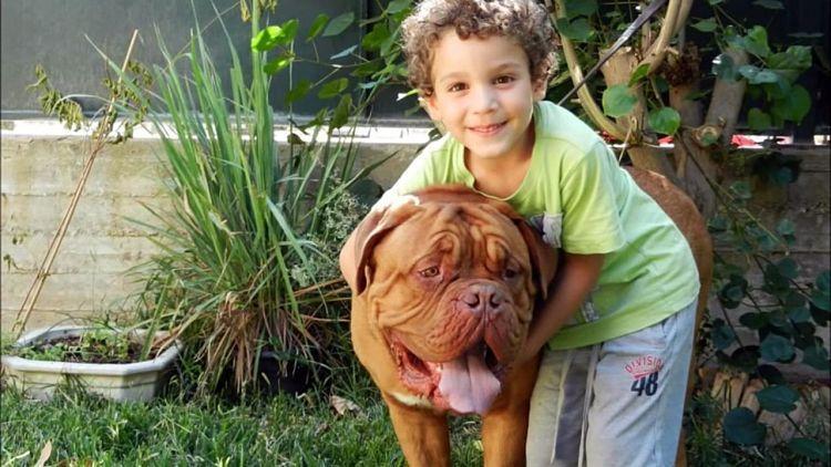 Los Dogos de Burdeos son perfectos compañeros para los niños