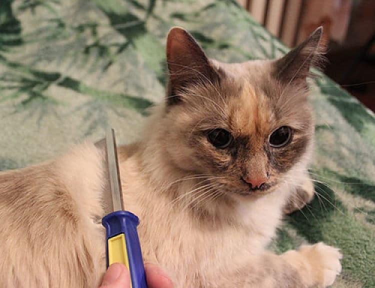 Peinar a nuestro gato con un peine fino nos ayuda a limpiar su pelaje de pulgas y huevos