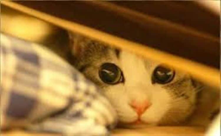 Los gatos también puede ser sensibles a los ruidos y luces de los fuegos artificiales